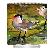 Little Terns Shower Curtain