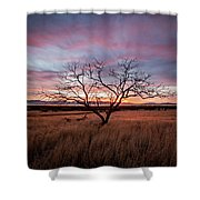Little Tree Sunset Shower Curtain by Wesley Aston