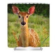 Little Warrior Shower Curtain by Lori Frisch