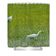 Little White Egret Shower Curtain
