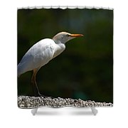 Little White Heron Shower Curtain