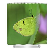 Little Yellow Butterfly Close-up Shower Curtain