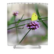 Little Yellow Butterfly On Verbena Shower Curtain