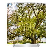 Live Oak And Spanish Moss 2 - Paint Shower Curtain
