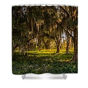 Live Oak Tree Shower Curtain