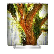 Live Oak With Cypress Beyond Shower Curtain