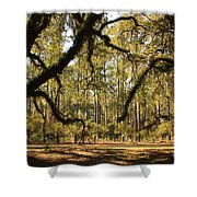 Live Oaks Silhouette Shower Curtain