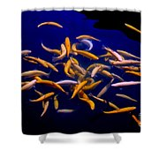 Lively Colorful Shower Curtain
