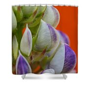 Lively Lupine Shower Curtain