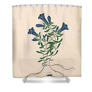 Liverpool Gentian With One Insect Shower Curtain