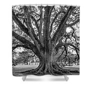 Living History Bw Shower Curtain