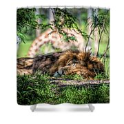 Living In Harmony - Lion Shower Curtain