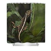 Lizard 2 Shower Curtain