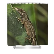 Lizard 3 Shower Curtain