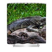 Lizard At The Zoo Shower Curtain