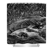 Lizard-bw Shower Curtain