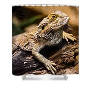 Lizard - Id 16217-202733-1873 Shower Curtain
