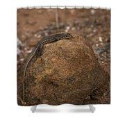 Lizard Shower Curtain