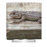 Lizard On Deck Shower Curtain