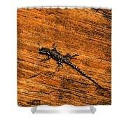 Lizard On Sandstone Shower Curtain