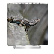 Lizard On Wood Fence Shiloh Tennessee 031620161698 Shower Curtain
