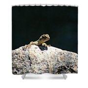 Lizard Rock Shower Curtain