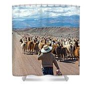 Llama Herd On Road Shower Curtain