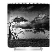 Loan Tree Shower Curtain