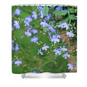 Lobelia Flowers Shower Curtain