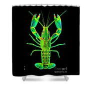 Lobster Crawfish In The Dark - Greenlime Shower Curtain