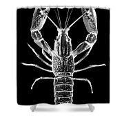 Crawfish In The Dark - Xray Shower Curtain