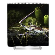 Lobster In Love Shower Curtain