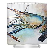 Lobster_001 Shower Curtain
