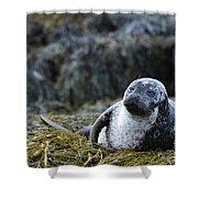 Loch Dunvegan's Harbor Seal Shower Curtain