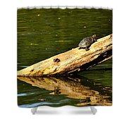 Log Turtle L 3584 Shower Curtain
