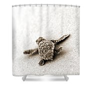 Loggerhead Shower Curtain