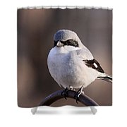 Loggerhead Shrike - Smokey Shower Curtain