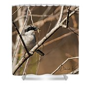 Loggerhead Shrike Shower Curtain