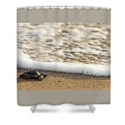 Loggerhead Turtle Hatchling 3 Delray Beach Florida Shower Curtain