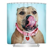 Lollipop 6 Shower Curtain