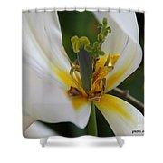 London White Tulip Shower Curtain