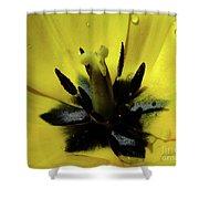 Lone Beauty - Tulip Shower Curtain
