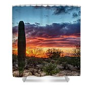Lone Cactus Shower Curtain