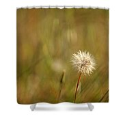 Lone Dandelion 2 Shower Curtain