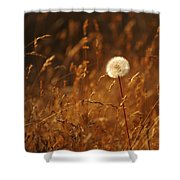 Lone Dandelion Shower Curtain