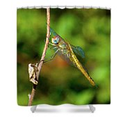 Lone Dragonfly Shower Curtain