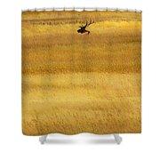 Lone Elk In Field Shower Curtain