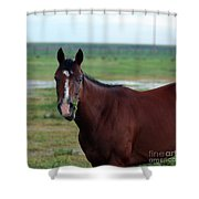 Lone Horse Shower Curtain