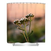 Lone Lady Shower Curtain