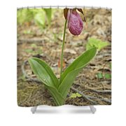 Lone Lady Slipper Shower Curtain